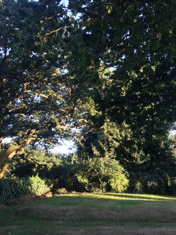 oak_treesjpg